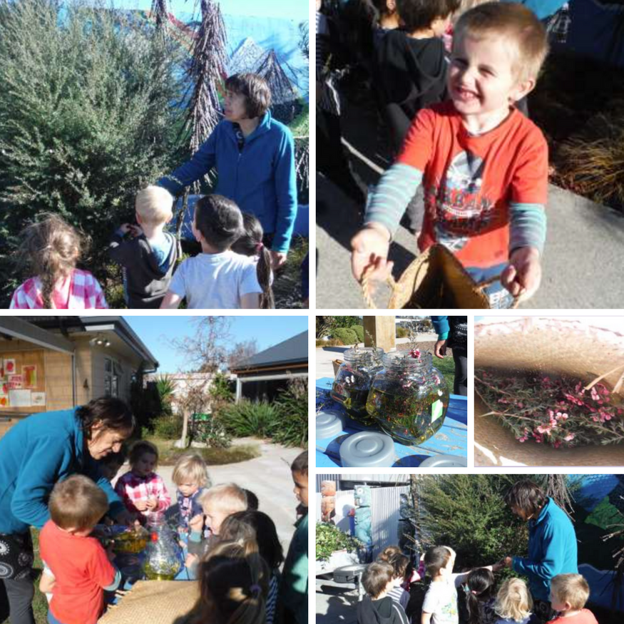 Learning from whanau at Mayfield Kindergarten