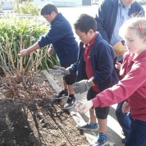 Gardening at Blenheim School