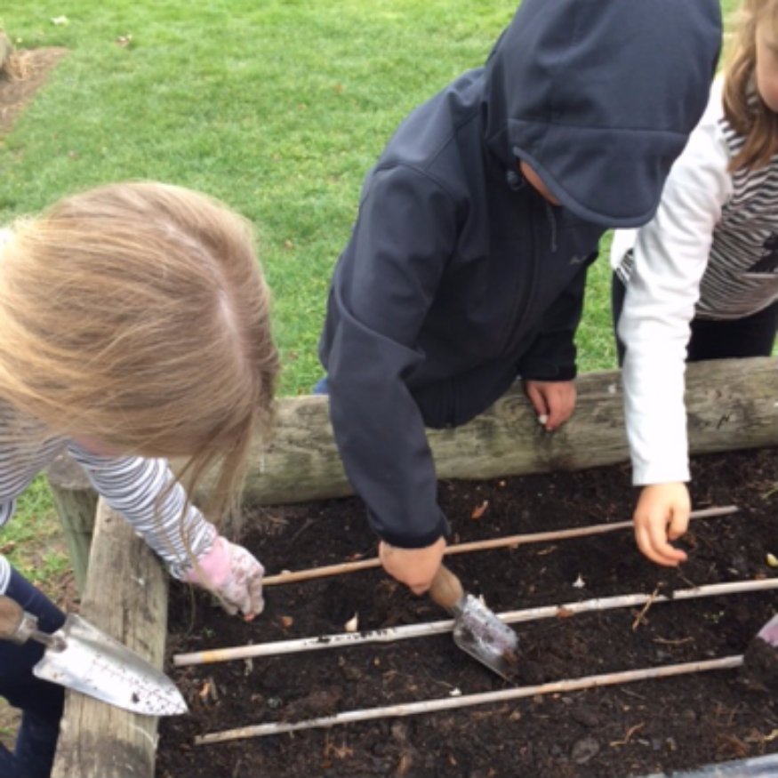 Fairhall School Kids Edible Gardens