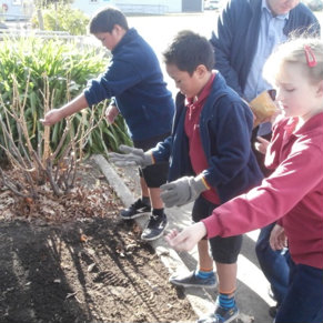 Gardening at Blenheim School