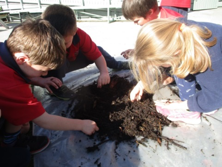 Compost investigations at Witherlea School