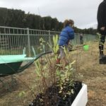 Grovetown School seedlings