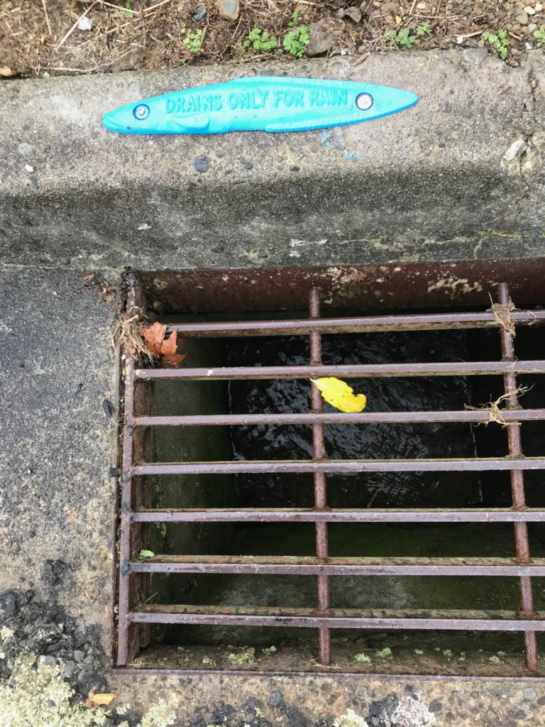 Eel by the drain