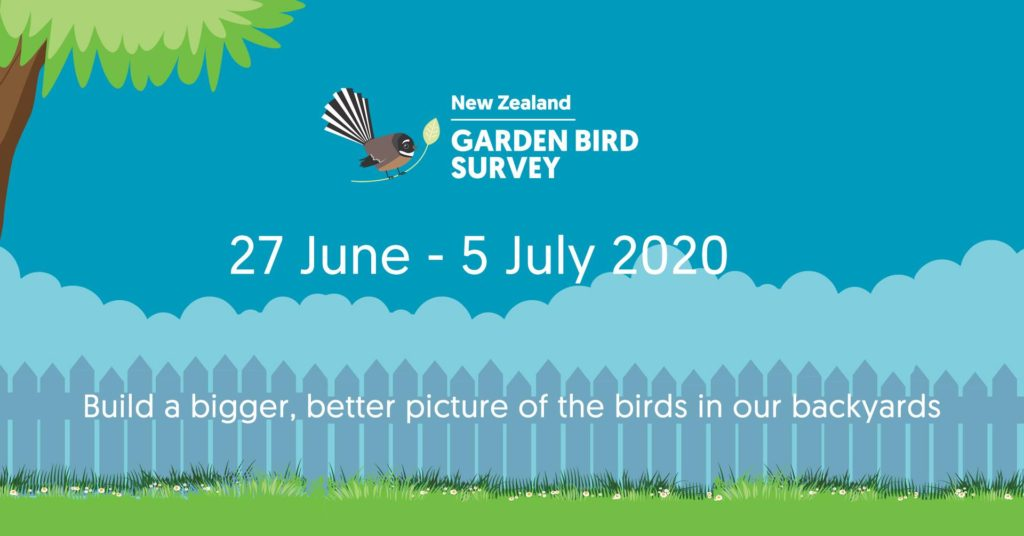 NZ Garden Bird Survey 2020