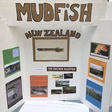 Mudfish project